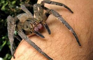 Wat zijn de giftigste dieren ter wereld