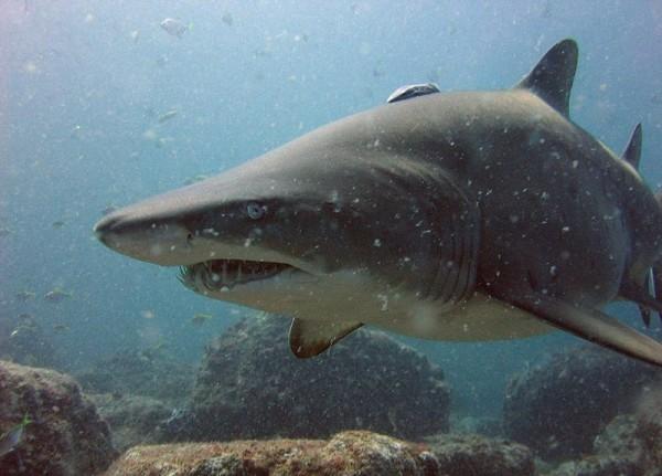 Dodelijke haaien top 10 (met filmpje)