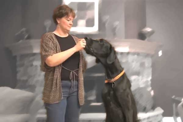Grootste hond ter wereld is Zeus (met filmpje)