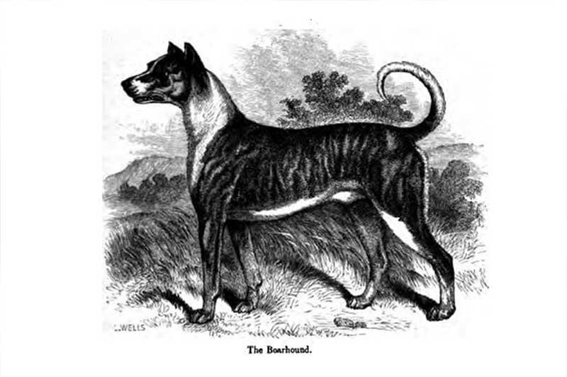Grootste hond ter wereld is Zeus