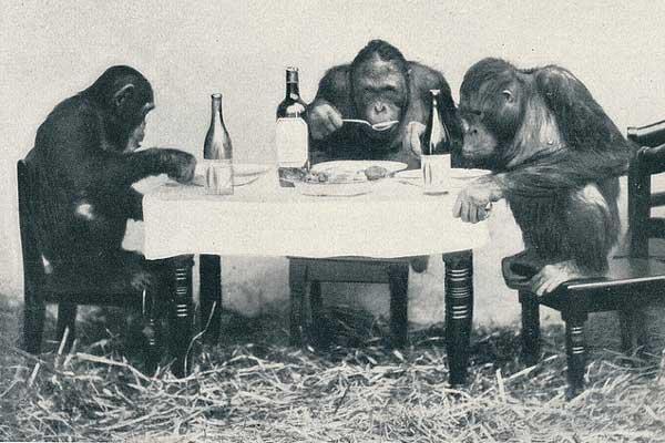 Intelligentste dier ter wereld is de chimpansee. De top 25