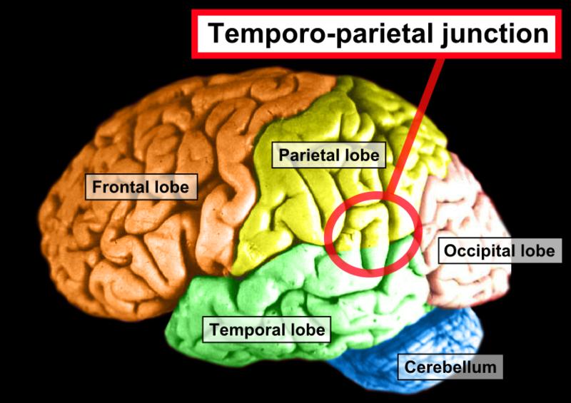Temporoparietal junction