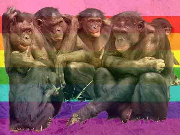 Alle homoseksuele dieren op een rij (de top 10, bi mag ook natuurlijk)