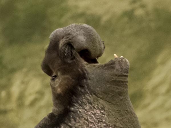 Luidruchtigste dieren, Top 15 herriemakers!