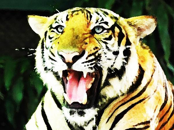 Mensen horen emoties van dieren zegt de universiteit van Brussel