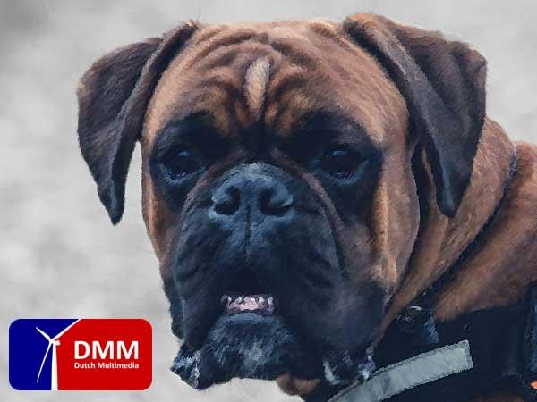 Honden bijten vooral bange mensen