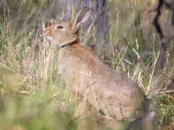 Alle spreekwoorden, gezegden en uitdrukkingen met het woord konijn