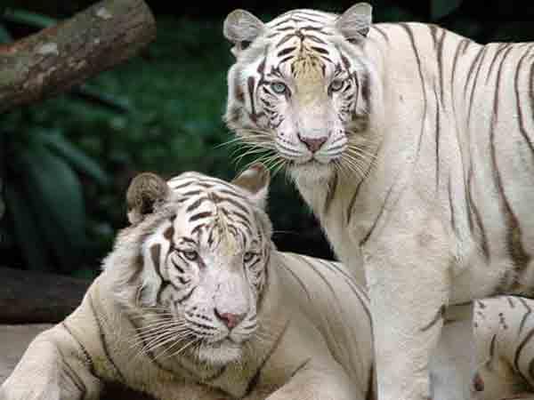 Mooiste dierentuinen ter wereld – de top 10