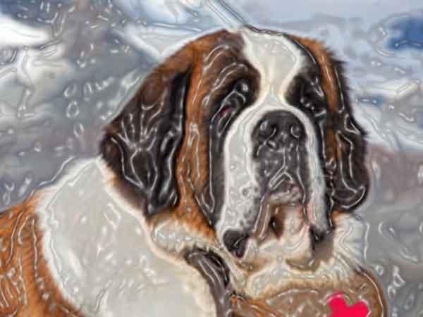 Honden liegen tegen baasje zegt Zwitsers onderzoek