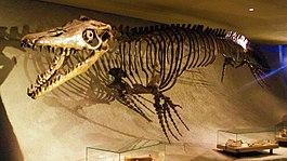 Mosasaurus: grootste roofdieren aller tijden