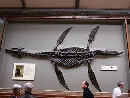 Pliosaurus