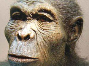 Meest voorkomende zoogdieren ter wereld