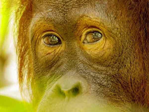 Meest beroemdste bedreigde diersoorten – Een top 10