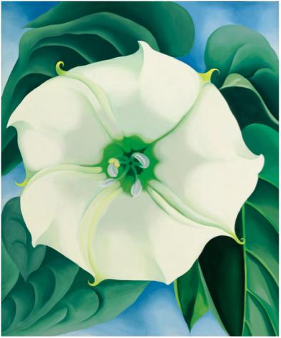 Jimson Weed, White Flower No. 1 (1932)