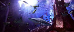 Ambassador Lagoon Aquarium