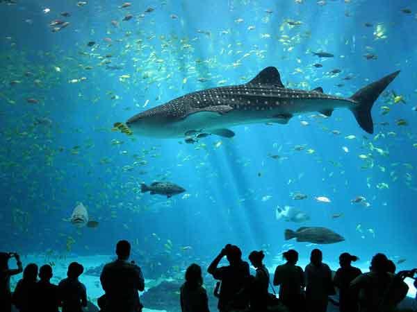 Grootste aquariums ter wereld – De Top 10