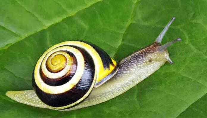 Sloomste dieren op aarde: de tuinslak