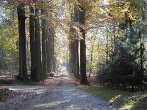 Pad in het Zoniënwoud