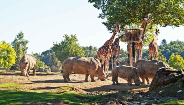 Grootste dierentuinen in Frankrijk – De top 10