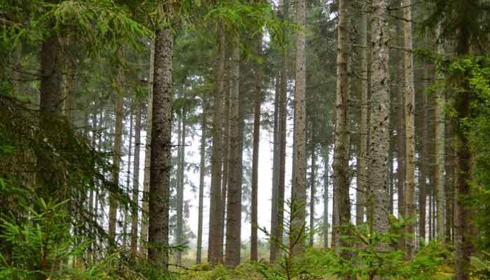 Top 10 landen met de grootste toename aan bosgebied 2021