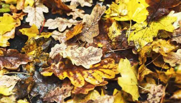 Tien tips: hoe overleef je de herfst op een prettige manier?