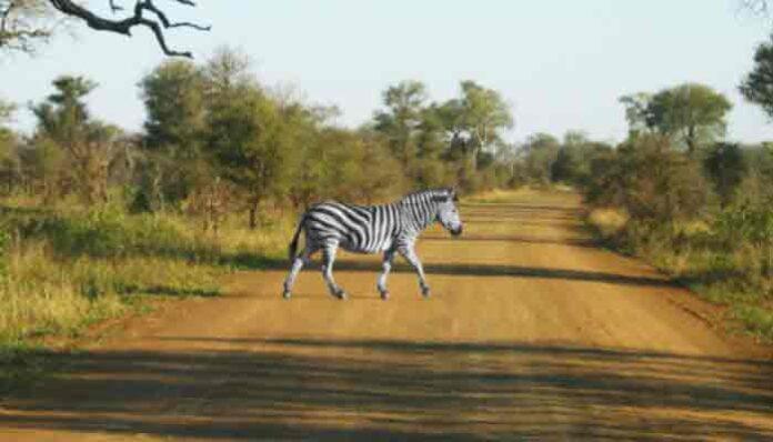 Kruger National Park, Zuid-Afrika: beste plaatsen op de wereld 2021 cf Times Magazine