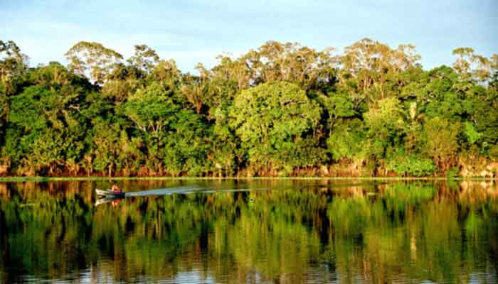 Top 10 grootste bossen ter wereld
