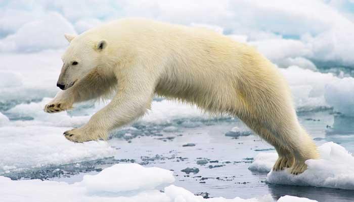 Top 10 grootste roofdieren die op het land leven